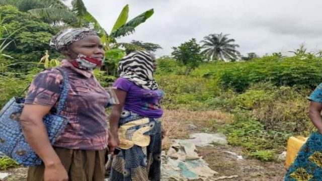 Small women farmers at Ibadan South West LGA, Oyo State inspecting the damage done to their plants due to lockdown occasioned by COVID-19