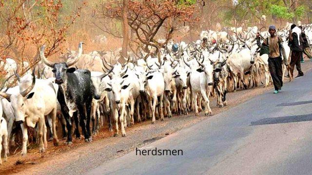herdsmen Photo